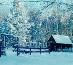 cropped-red-shed-and-yard-in-winter